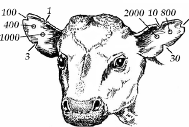 Компьютерный учет животноводства